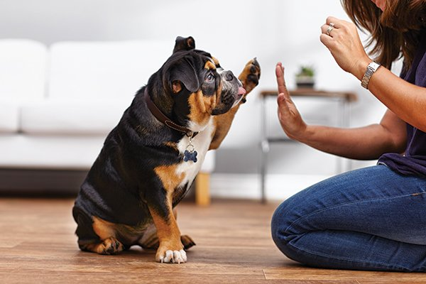 10 Questions You Should Ask a Dog Trainer