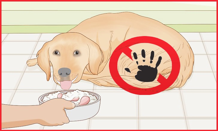 20 Dangerous Foods People Give to Their Dogs Without Realizing It and why pet insurance is important?