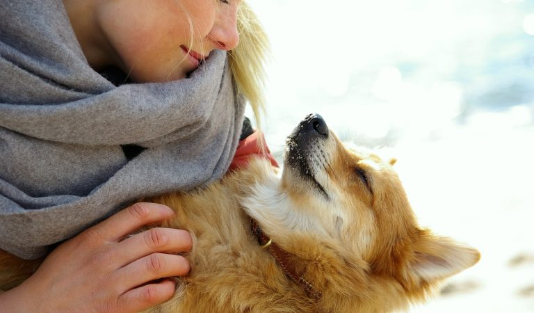 Try These 15 Ways Of Showing Your Dog You Love Them